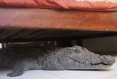 Crocodile-under-bed