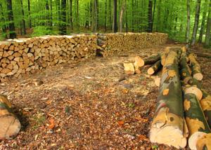 sustainable wood production