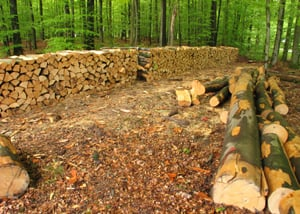 sustainable wood production