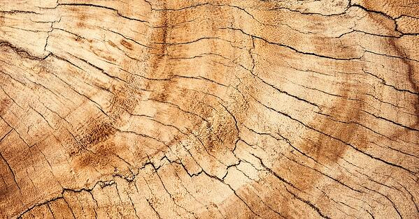 sustainable wood grain from ethically managed forests